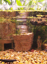 Indoor water garden with newts, lucky bamboo, java fern, java moss, cryptocoryne and duckweed
